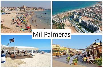Mil Palmeras - Van Dam Estates