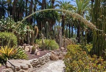 Elche's tuin geïnspireerd door de imperial palm - Van Dam Estates