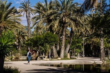 El Palmeral: Een zee van palmbomen in Elche - Van Dam Estates