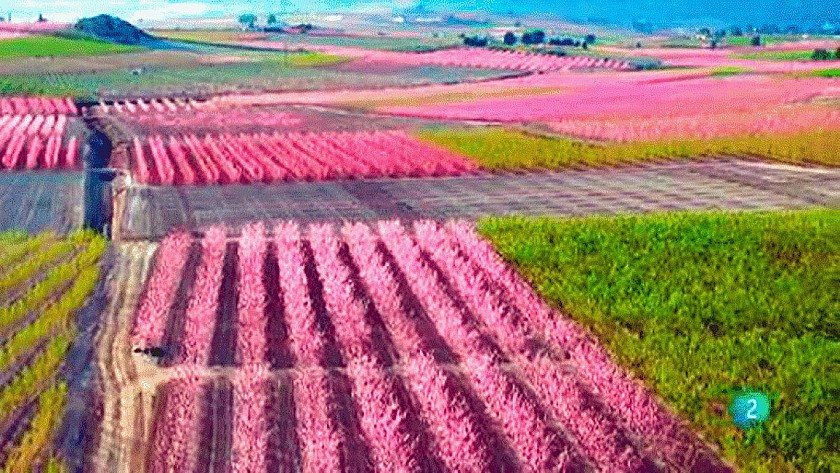 Eruptie van kleuren in de vallei bij Cieza - Van Dam Estates