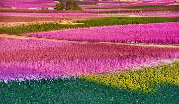 Erupción de colores en el valle cercano a Cieza - Van Dam Estates