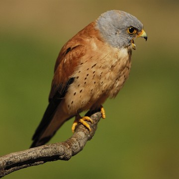 Costa Blanca good for bird watchers - Van Dam Estates